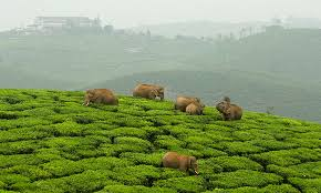coonoor travels